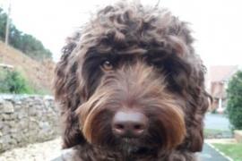 Digby, el perro que evitó que una mujer se quite la vida