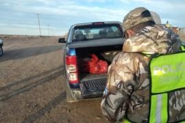 Transportaban carne faenada