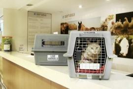 Seis destinos para visitar con mascotas