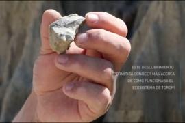 Encuentran el fósil de una especie nunca antes vista en Argentina