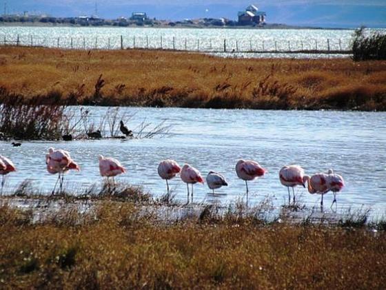 La Reserva Laguna Nimez en El Calafate. (Foto archivo)